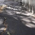 marciapiedi-radici-alberi-535x300